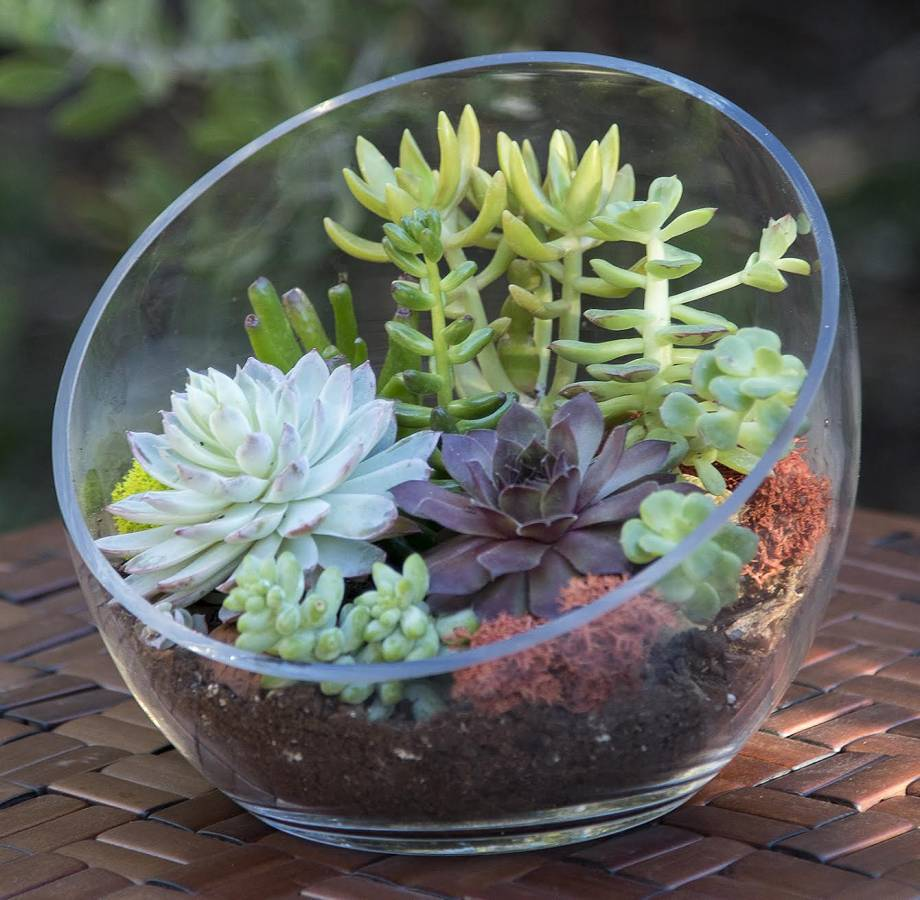 Simply Succulents Indoor Outdoor Succulents For Sale