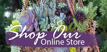 Simply Succulents® Succulent Plants | Buy Succulents for Sale