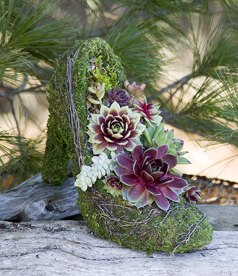 High Heel Pump Shoe Planted With